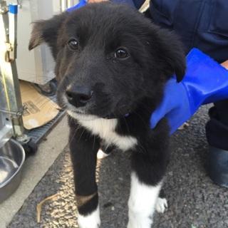 生後2〜3ヶ月 可愛い子犬①♬