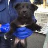 生後2〜3ヶ月 可愛い子犬②♬