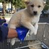 生後2〜3ヶ月 可愛い子犬③♬