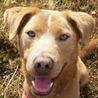 譲渡候補犬のご紹介:ガルボ(譲渡後に名前変更可)