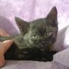ちょっと人見知りだけど甘えん坊な黒猫の男の子♪♪ サムネイル5