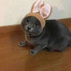 猫なのにうさぎさん