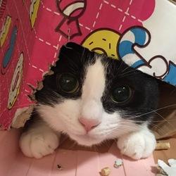 猫の譲渡会 サムネイル3