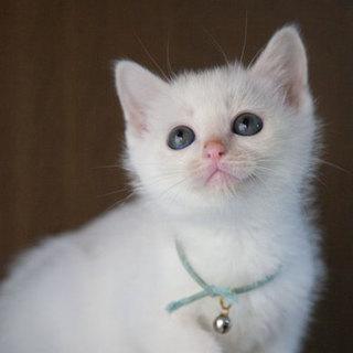 ハンサムな白猫君♂
