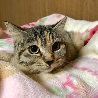 美猫の予感♪9月生まれ・かぐやちゃん♀