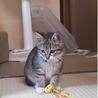 4か月 キジ白美猫のやんちゃん サムネイル3