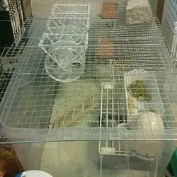 ファンシーマウスおすすめ飼育方法とケージ