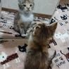 3ヶ月の三毛猫ちゃん