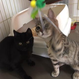 トライアル中!先住猫ちゃんと仲良くしてもらってます