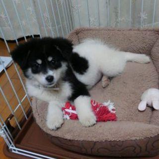 子犬黒白 3月 人なつこい
