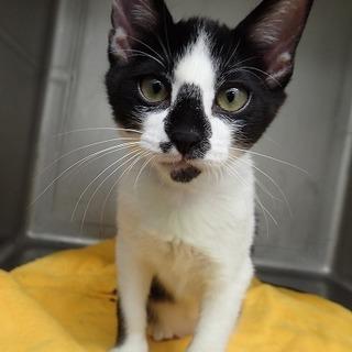 病院に置き去りにされた子猫