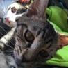 3ヶ月位の子猫を保護しました!