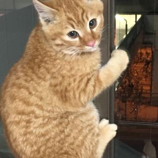 とっても可愛い茶トラ猫ちゃん