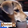 Rex - レックス さん