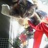 昨年クリスマスイブに撮影したベルクさんまだ6.2キロくらいでした