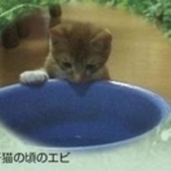「ボクんちの庭にある猫トイレの秘密」サムネイル3