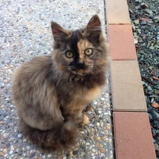 美人猫ちゃんの里親様募集中です。