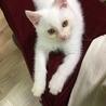 2か月 白猫のミルク サムネイル2