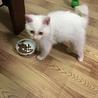 2か月 白猫のミルク サムネイル5