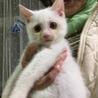 2か月 白猫のミルク サムネイル6