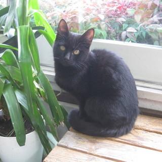 収容期限が切れた為引き出しました!可愛い黒猫♪