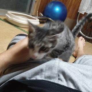 人懐っこい子猫です