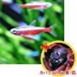 熱帯魚(淡水魚)