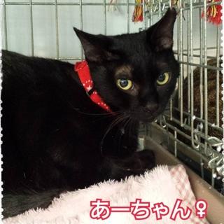 膝のりの甘えん坊黒猫