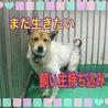【追記、緊急】期限:26日まで 洋犬風の可愛い子!