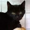 ひめ 黒猫♪ビロードのようにスベスベ♪4ヶ月 サムネイル2
