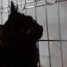ひめ 黒猫♪ビロードのようにスベスベ♪4ヶ月 サムネイル3