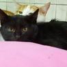 ひめ 黒猫♪ビロードのようにスベスベ♪4ヶ月 サムネイル6