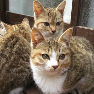 可愛い2匹の子猫です