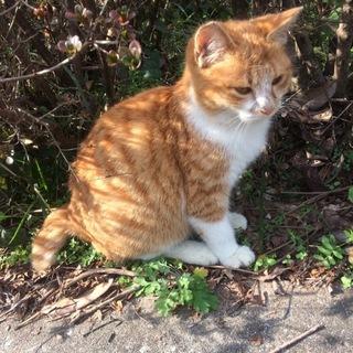 野良子猫さんの里親になってくださる方を募集します。