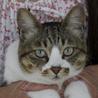 亡くなった愛猫と瓜ふたつの猫見つけた!