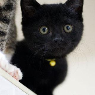 丸顔・丸い目、超かわいい黒猫♂