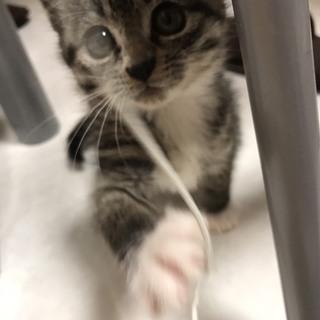 人懐っこい子猫の里親になってください