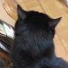 漆黒のブンブンは肉球まで黒い福猫/推定5歳 サムネイル3