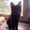 「面談予定」お返事黒猫「マロン」くん