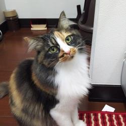 泥棒猫(`ω´)!こらっ‼