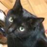 漆黒のブンブンは肉球まで黒い福猫/推定5歳 サムネイル4