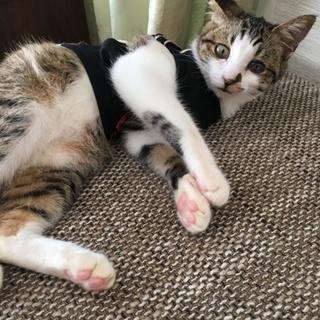 殺処分間近の子猫を預かり里親さん探してます①