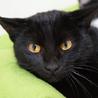 ハスキーボイスな黒猫くん