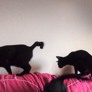 でら!黒猫4兄妹!