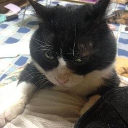 昨日、猫を亡くしましたサムネイル