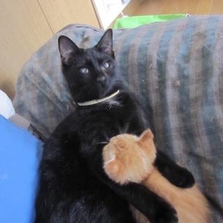 動画あり かわいい世話焼き黒猫かやこちゃん