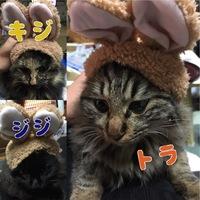 トラ♡キジ♡ジジ
