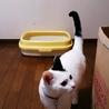 猫に和み(保護活動者)