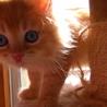 天使の子猫