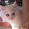 天使の子猫2